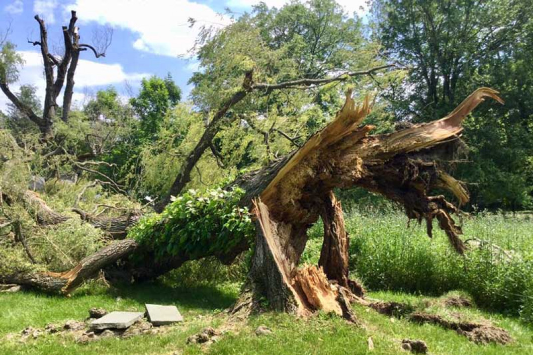 Request our tree removal service  in Port Chester, NY or Greenwich, CT